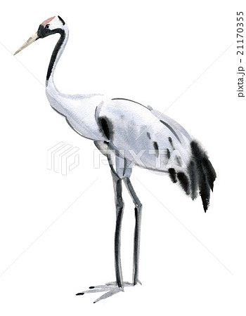 Watercolor illustration of a bird crane 21170355
