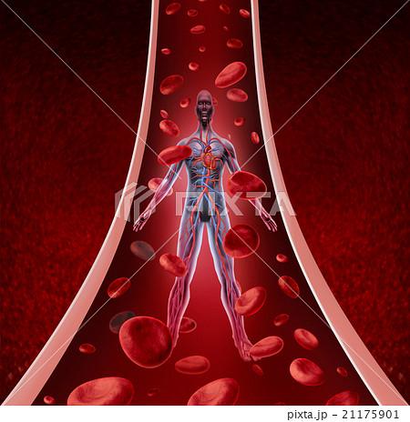 Human Circulation Healthのイラスト素材 [21175901] - PIXTA