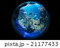 aquarium 21177433