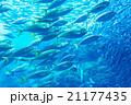 aquarium 21177435