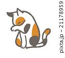 猫 21178959