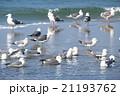 海鳥 21193762