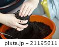 Seedlings on the vegetable tray. 21195611