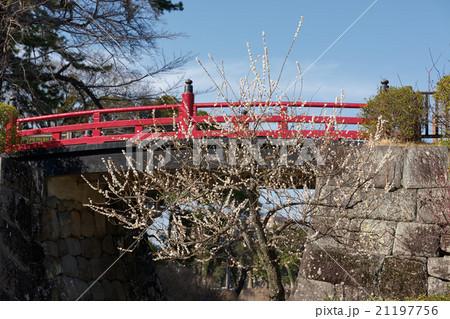 赤い橋(常盤木橋)と白梅、春の小田原城、神奈川県 21197756