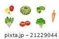 野菜 新鮮 緑黄色野菜のイラスト 21229044