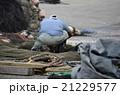 漁港の漁師 21229577