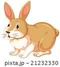 Brown rabbit on white background 21232330