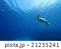 アオウミガメ カメ 海中の写真 21235241