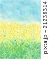 菜の花 パステル画 手書き 21238314