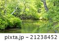川 初夏 新緑の写真 21238452