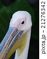 動物 鳥 鳥類の写真 21276342