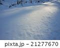 雪原の木洩れ日 21277670