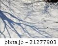 緊張の雪原 21277903