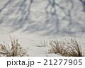 雪原の追跡劇 21277905