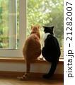 2匹の猫 窓辺の猫  21282007