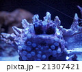 美ら海水族館 にらめっこ 21307421