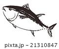 鮪 魚 水彩画のイラスト 21310847