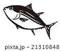 鮪 魚 水彩画のイラスト 21310848