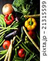 夏野菜 21315599
