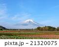 富士山 青空 チューリップの写真 21320075