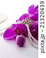 ピンクの胡蝶蘭 21320439
