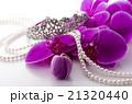 ピンクの胡蝶蘭 21320440