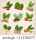 Set of vector various nuts. Vector illustration 21336077