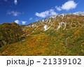 紅葉 立山ロープ―ウェイ 立山の写真 21339102