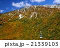 紅葉 立山ロープ―ウェイ 立山の写真 21339103