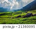 お茶 茶 茶畑の写真 21360095
