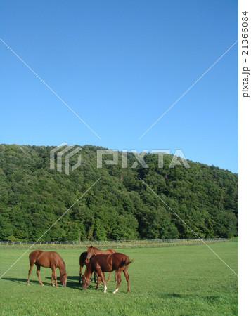 様似町の馬の写真素材 [21366084] - PIXTA