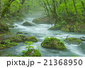 新緑の奥入瀬渓流 21368950