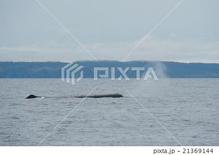 潮を吹くマッコウクジラ 21369144
