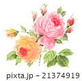 花 薔薇 蕾のイラスト 21374919