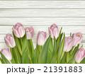 お花 フラワー 花のイラスト 21391883