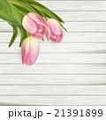 ピンク ピンク色 桃色のイラスト 21391899