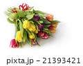 Bouquet Of Fresh Multicolor Tulip Flowers 21393421