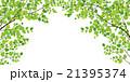 若葉 21395374