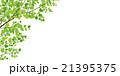 若葉 21395375