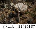 動物 池 溜池の写真 21410367