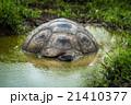 動物 池 溜池の写真 21410377