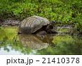 動物 池 溜池の写真 21410378