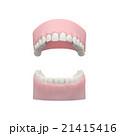 歯の模型, デンタルモデル 21415416