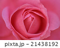 椿 21438192