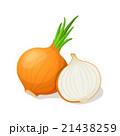 タマネギ 玉ねぎ 玉葱のイラスト 21438259