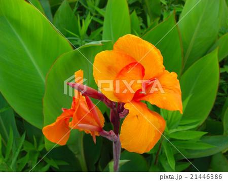オレンジ色の花 21446386