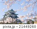 名古屋城天守閣と桜 北側から 21449260