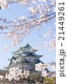 名古屋城天守閣と桜 北側から 21449261