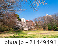 桜 春 公園の写真 21449491