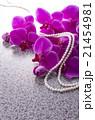 真珠と胡蝶蘭 21454981